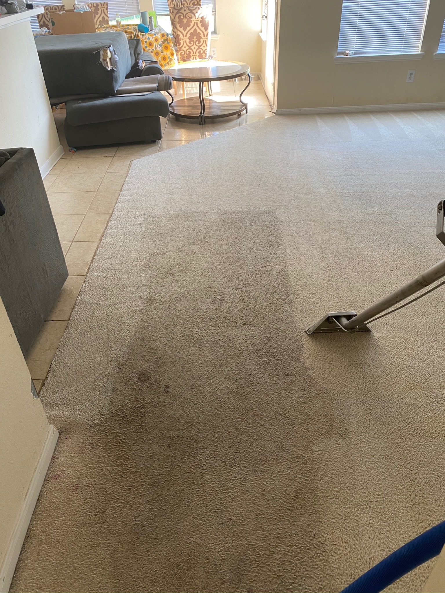 texas professional carpet cleaning